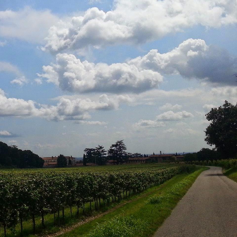 vigne franciacorta