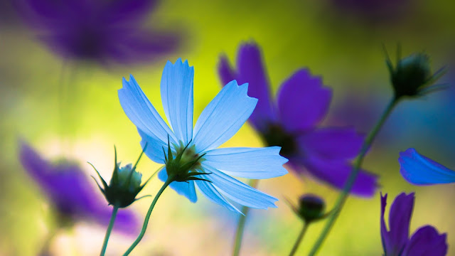 Blue flower petals close-up HD Wallpaper