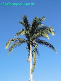 Palmeira da Praça