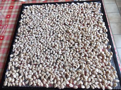 Séchage et conservation des graines de tournesol