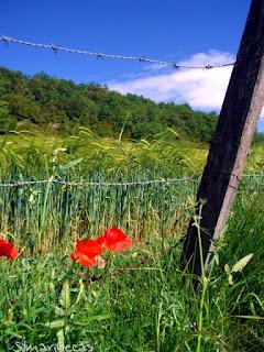 Camino del cementerio en Corres/Korres- Parque natural de Izki-