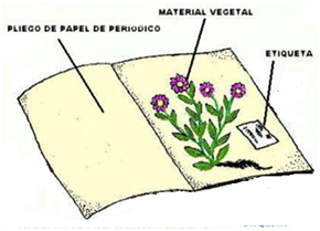Laboratorio de ciencias biolog a y qu mica pr ctica de for Importancia de las plantas ornamentales