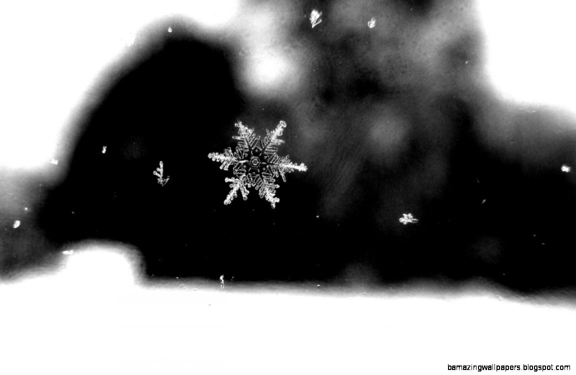 eleanorsphotography – Look actual snowflakes How amazing