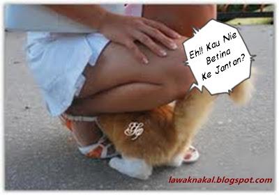 kucing lawak