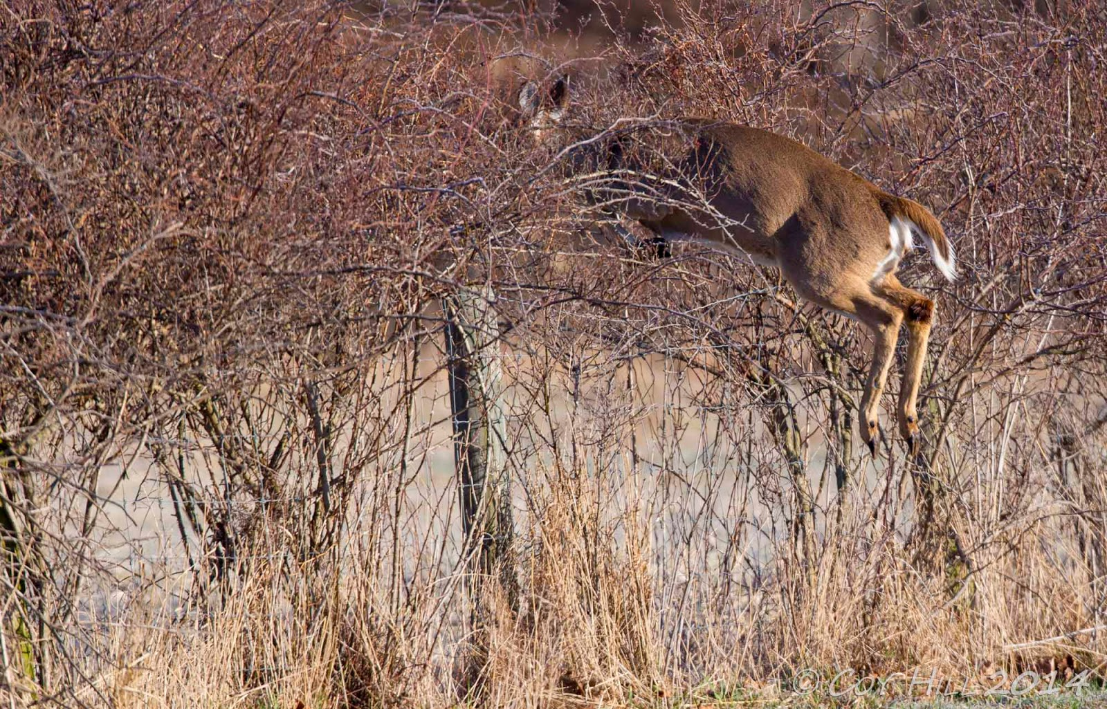 Deer Fencing Fences The Deer Cross Over