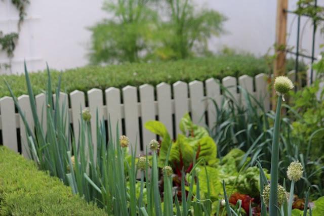 khu vườn độc đáo