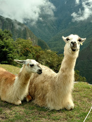 "What does the llama say? ""Spring is just around the corner!"""