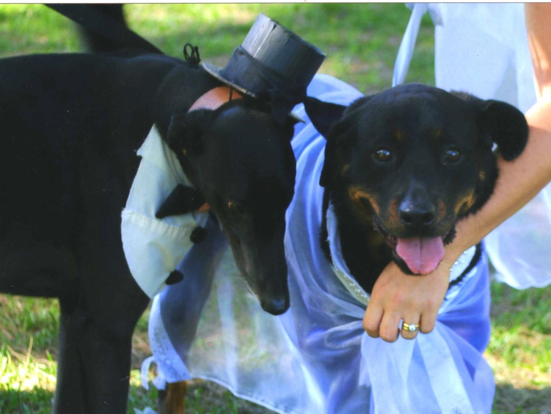Eastern Suburbs Dog Training Club