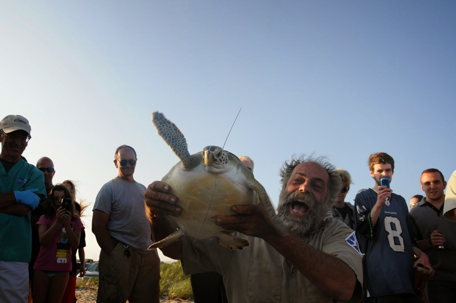 Cape Cod Animal Rescue Part - 38: Left And Below: Dennis Murley From The Mass Audubon Wellfleet Bay Wildlife  Sanctuary Lifts A Green Sea Turtle From The Transport Carrier.