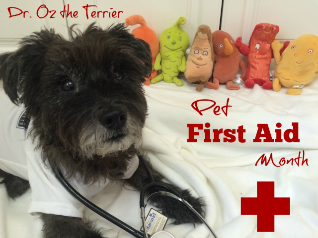 Dr. Oz the Terrier finds great app for Pet First Aid