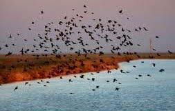 Tsunami Killed Birds
