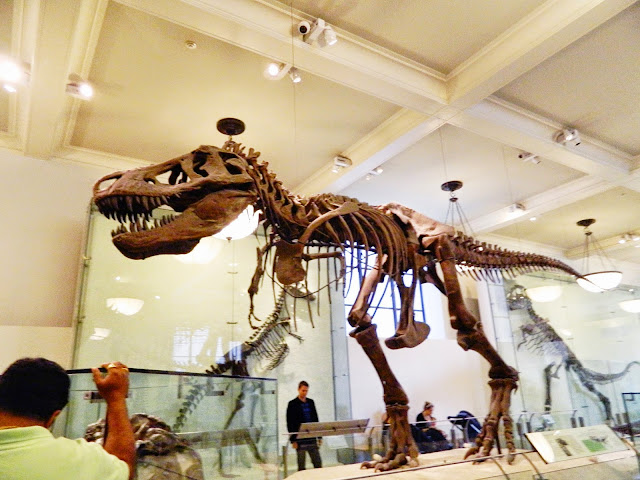 new york city american national history museum t-rex clear photo dinosaur bones