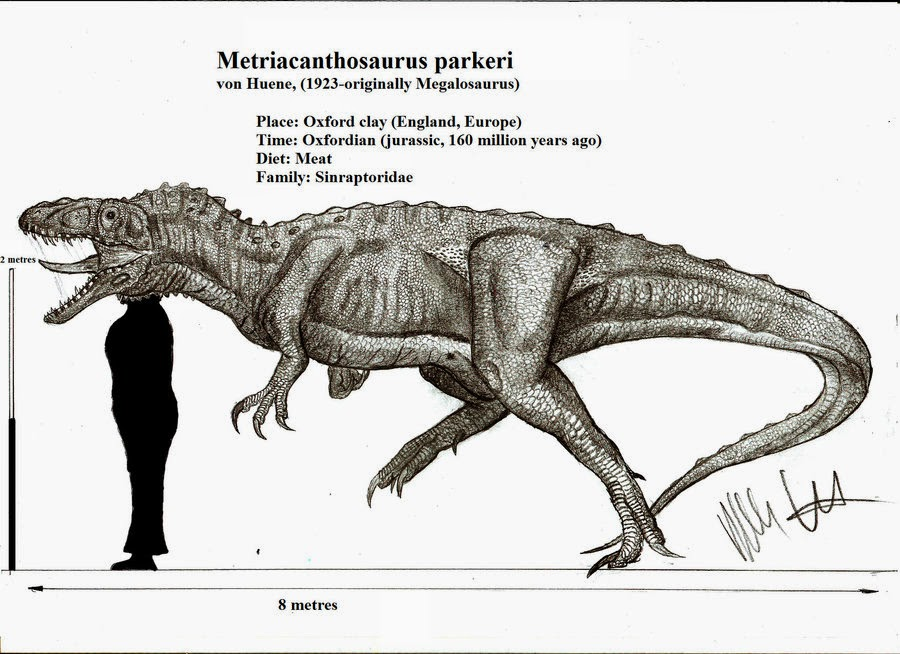 Metriacanthosaurus The Blog That Time For...