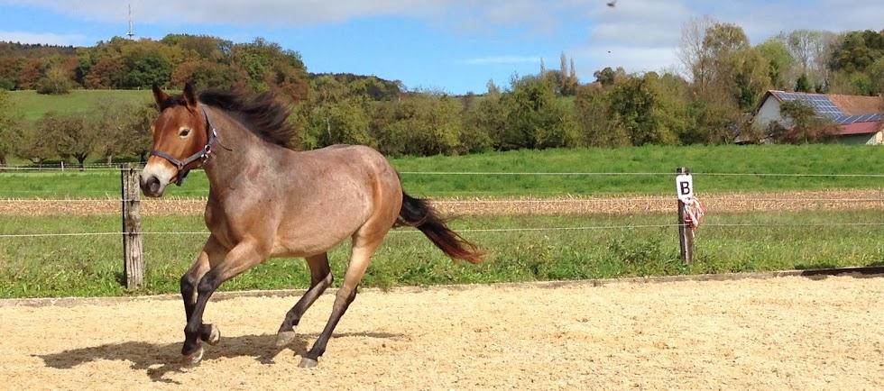 Penny das Pony