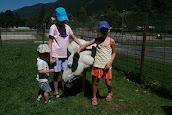 wakacje z osłami