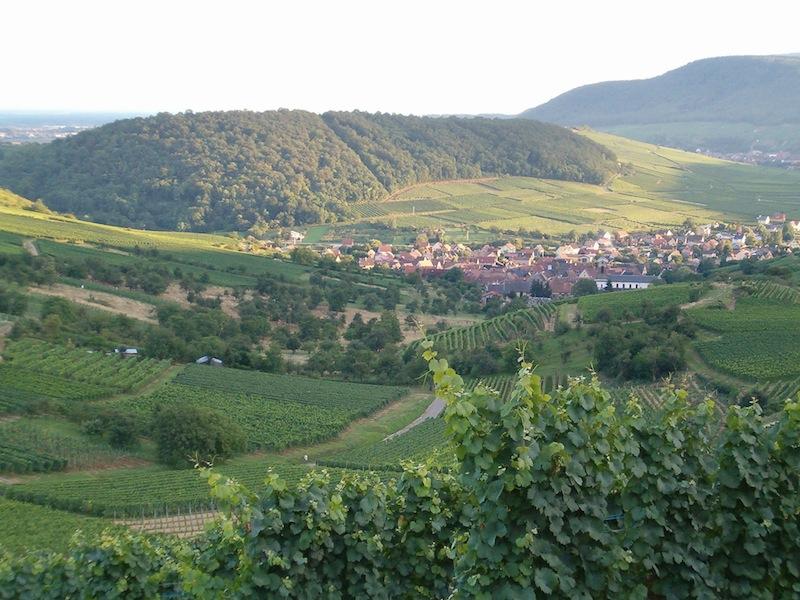 L 39 actualit d 39 eguisheim environs par l 39 quipe de l 39 office de tourisme d couvrez le pays de - Office de tourisme eguisheim ...