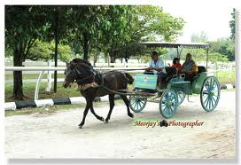 Lagu anak Indonesia: Naik Delman(Kereta Kuda) versi Bahasa Inggris