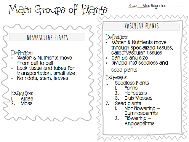 Miss Reynolds Science Blog Main Groups of Plants Nonvascular – Vascular and Nonvascular Plants Worksheet