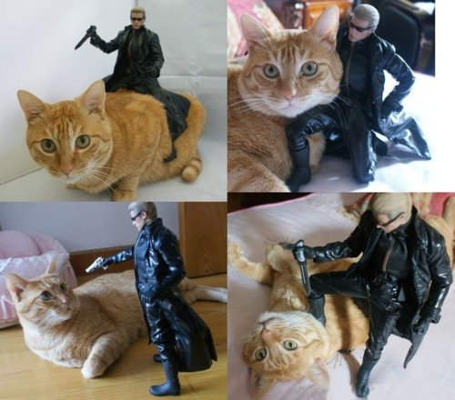 Dramatic Cat With Albert Wesker - Funny Kitty