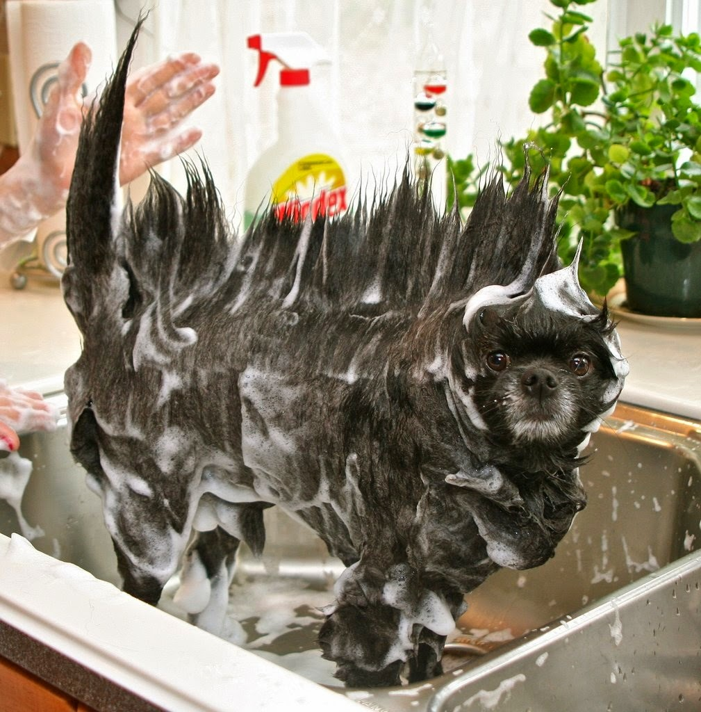 Washing the Dog