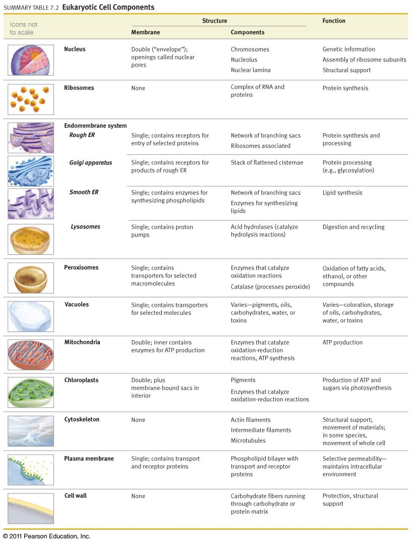 Welcome to the Biology Blog October 2015 – Cell Organelles and Their Functions Worksheet