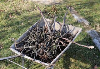 Lots of sticks were still hidden under the grass