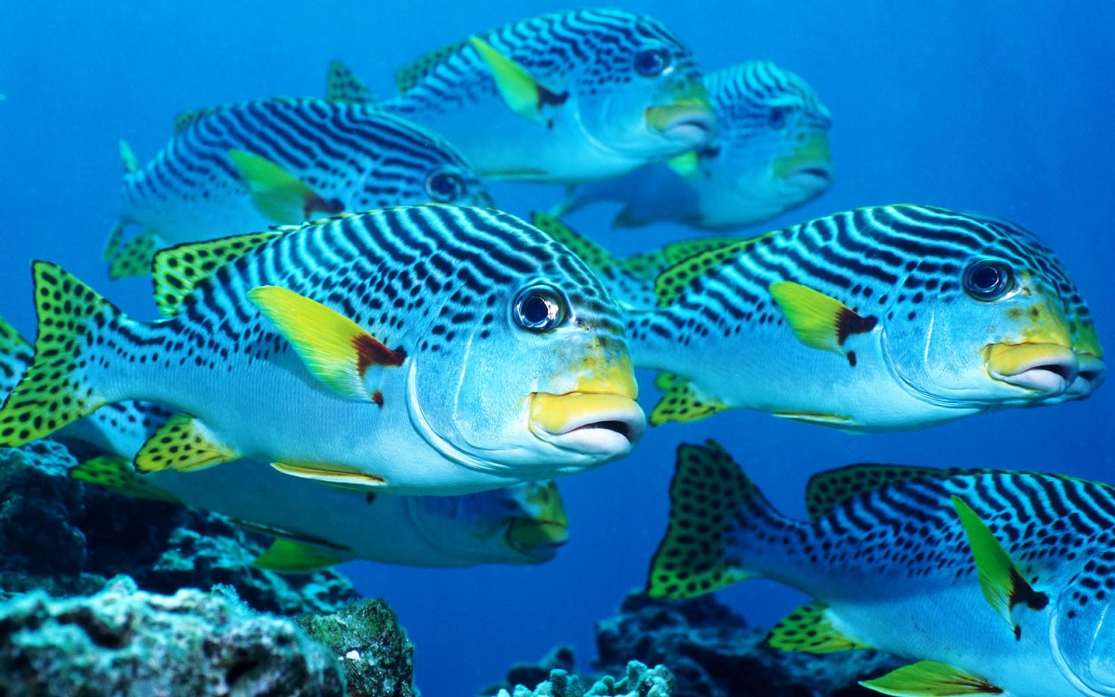 Blue sea 1 600 1 000 pixels sea pinterest for 95 9 the fish