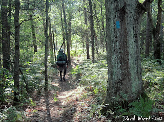 follow blue markers trail, michigan national forest trail, hiking