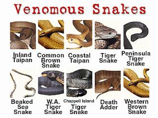 ular berbisa,venomous snake,undeadly snake