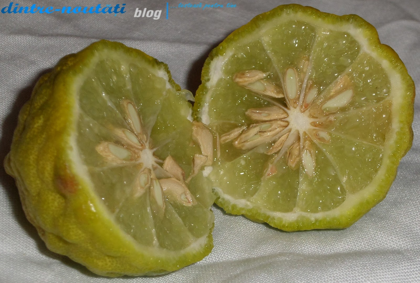 Makrut lime Mauritius papeda