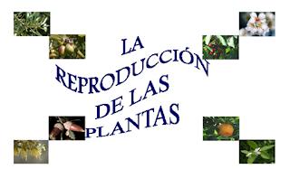 http://cplosangeles.juntaextremadura.net/web/edilim/curso_4/cmedio/las_plantas/la_reproduccion/la_reproduccion.html