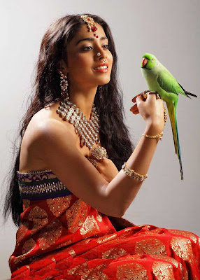 shriya saran new saree hot photoshoot