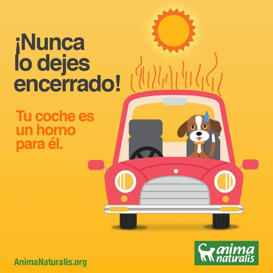 NO EL DEIXIS AL COTXE!