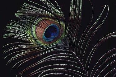 схема вышивки перо павлина - Современное бисероплетение.