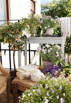 balkon ogród