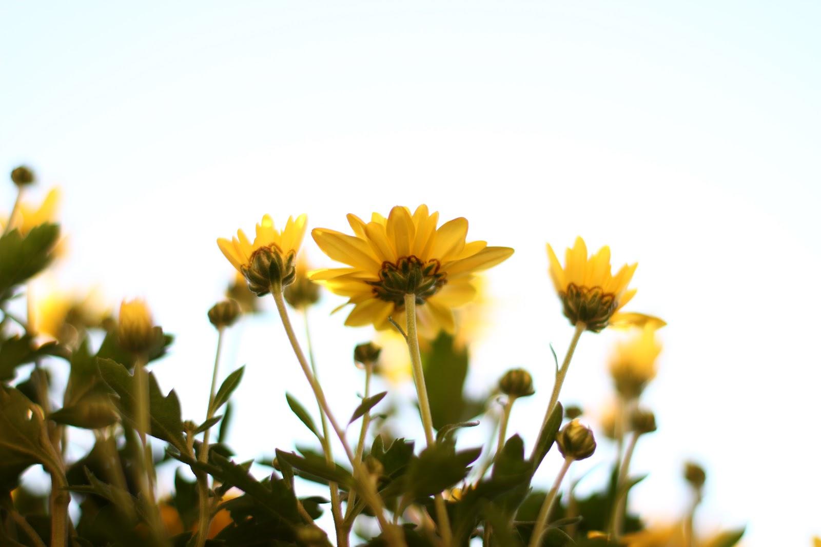 lolsonly.com の掲示板投稿写真&画像