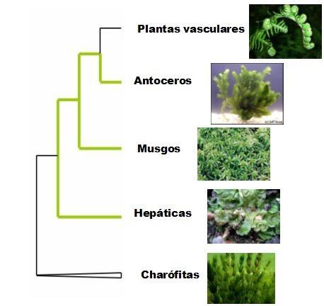 El invernadero de martina nuevas filogenias en plantas for Origen de las plantas ornamentales