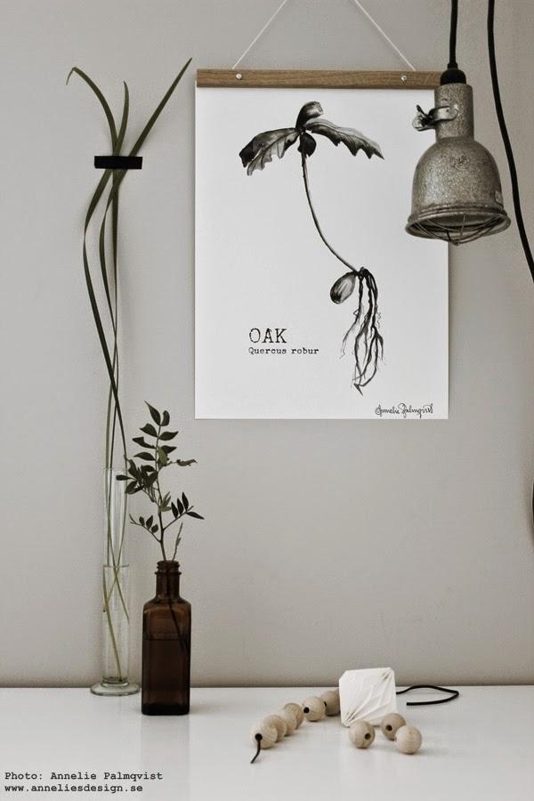 oak, tavla ekollon, svart och vitt, svartvita tavlor, planta, ekplanta, ekplantor, växt, träd, ek, konsttryck, artprint, artprints, print, prints, poster, posters, grått, gröna växter, webbutik, webshop,