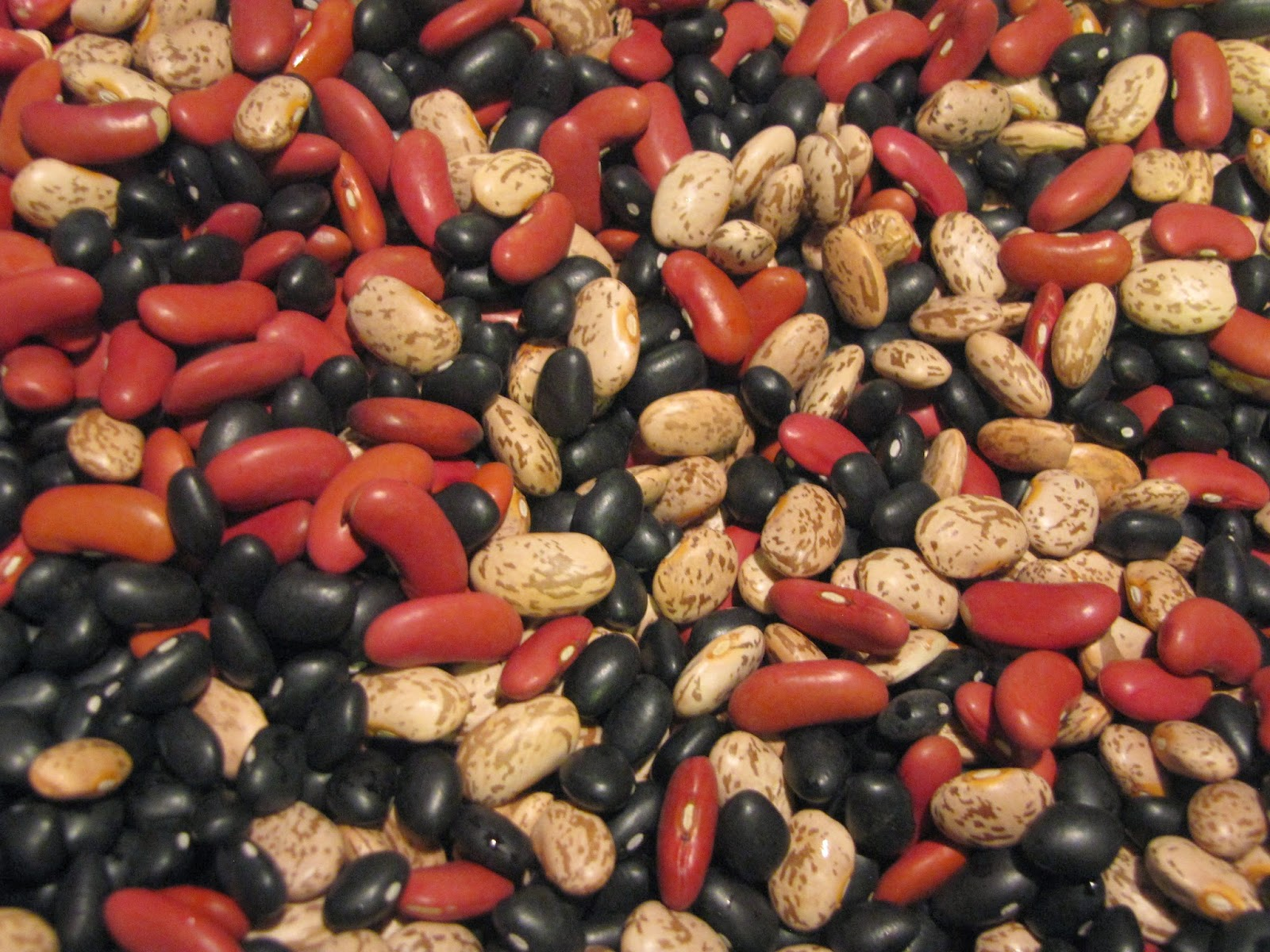 A mix of red kidney beans, pinto beans and black beans.