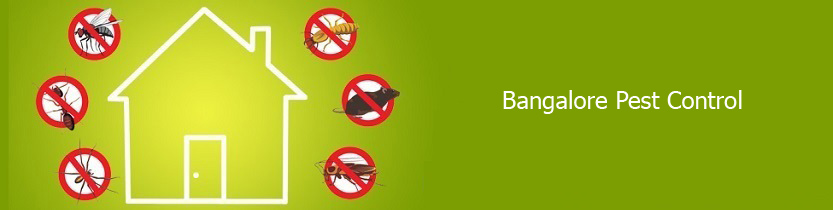 Bangalore Pest Control - Cockroach Control, Bed Bugs Control Bangalore