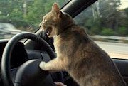 blog śmieszne koty smieszne zdjecia koty