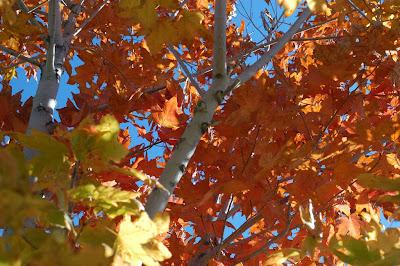 otoño estados unidos