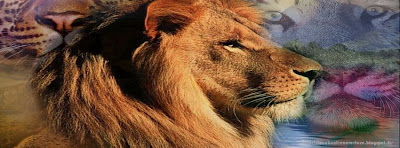 photo couverture facebook le roi lion