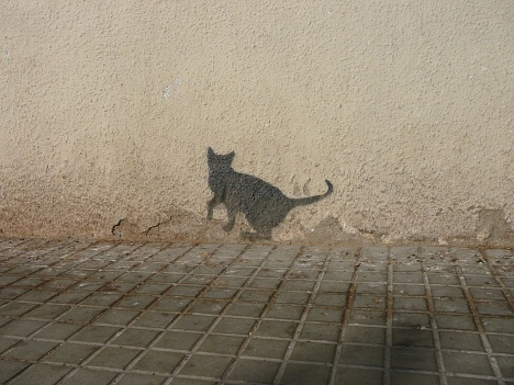 The Cat Ladies: Cat shadow | Unknown