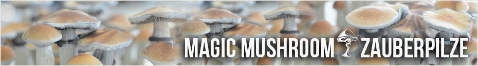 Magic Mushrooms & Zauberpilze