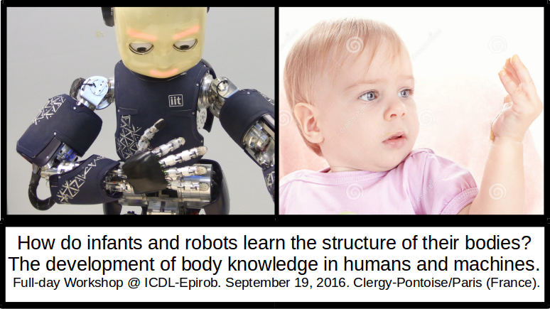 The development of body knowledge in  humans and machines