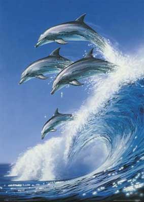 Delfines+8 Imagenes y Fotos de delfines...