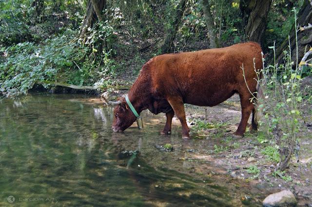 toro-rojo-fotografia-carolum-art