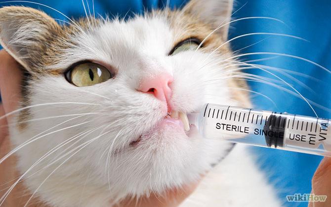 Senior cat constipation treatment