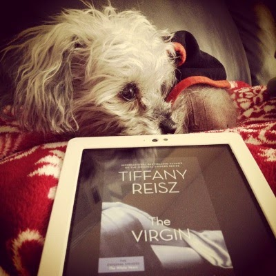 A fuzzy grey poodle, Murchie, curls in a tight ball atop a fuzzy red blanket. Before him sits a white Kobo with The Virgin's cover on its screen. The cover features a woman's purple-tinted, silk-draped posterior and thighs against a black background.